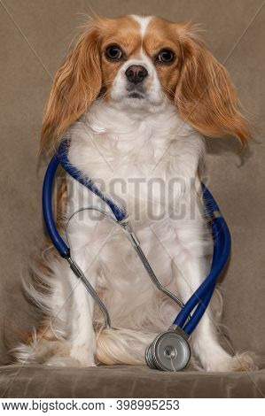 Cavalier King Charles Spaniel With A Stethoscope