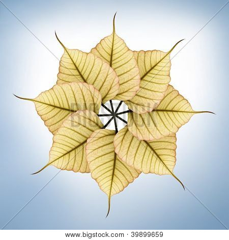 Fresh, New & Bright Peepal(pipal) Leaves Arranged In Circular Fashion On Blue Background Illuminated