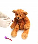 shot of a bear having a blood test poster