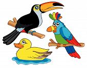 Various cute birds collection 01 - vector illustration. poster
