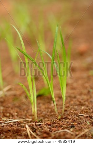 New life-Plants