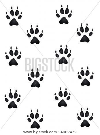 Wildlife Paw Prints