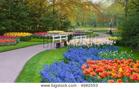 Many Spring Flowers In Many Colors