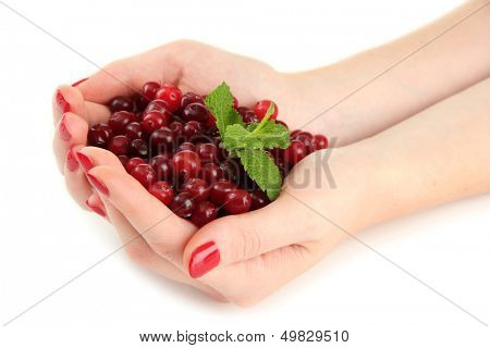 Woman hands holding ripe red cranberries, isolated on white