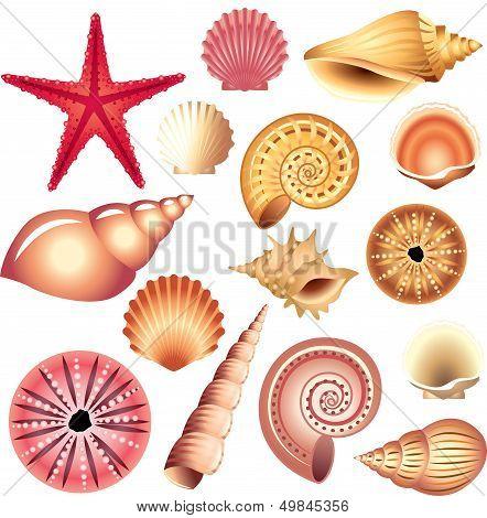 seashells isolated on white
