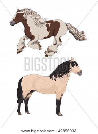 Two Beautiful Wild Horses.