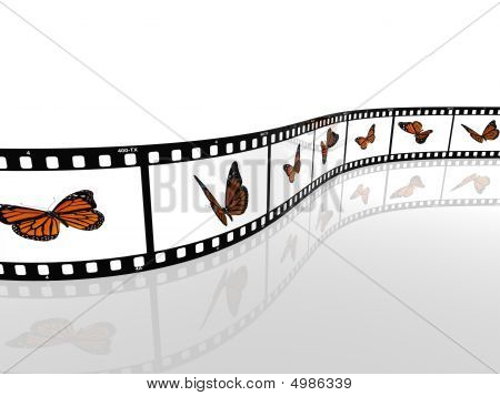 Butterfly On A Photographic Film Cell