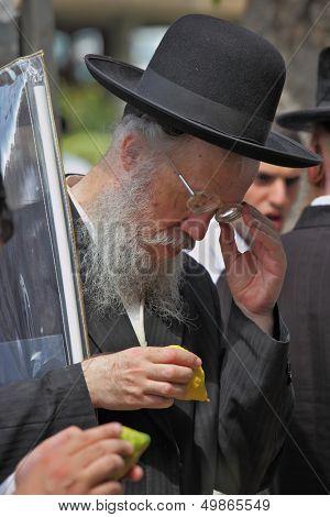 Bnei Brak - September 22: An old orthodox Jew in glasses and black hat picks citrus before the holiday of Sukkot September 22, 2010 in Bnei Brak, Israel