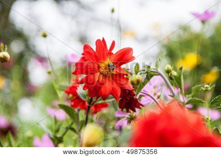 Flores con abeja
