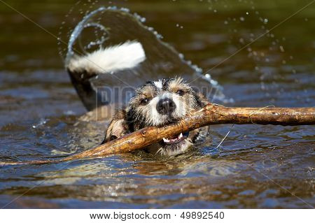 Dog With A Stick In The Water