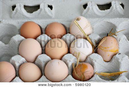 Unwashed Fresh Organic Eggs