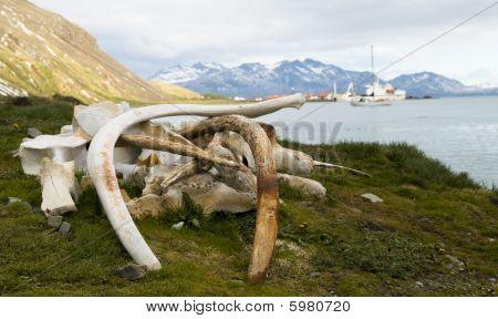 Whale Knochen Süden georgischen Walfangstation