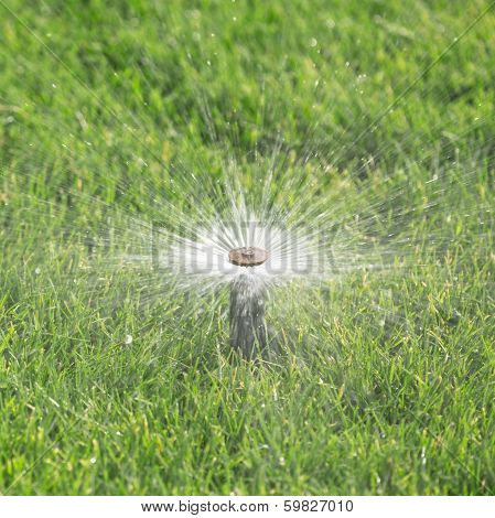 automatic irrigation system with sprinkler watering fresh lawn poster