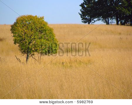 Lonely Tree At Yellow Field