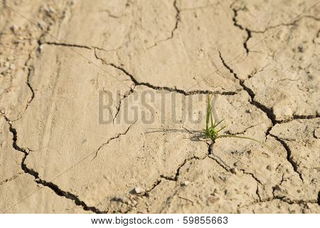 Green Grass Growth On Arid Area