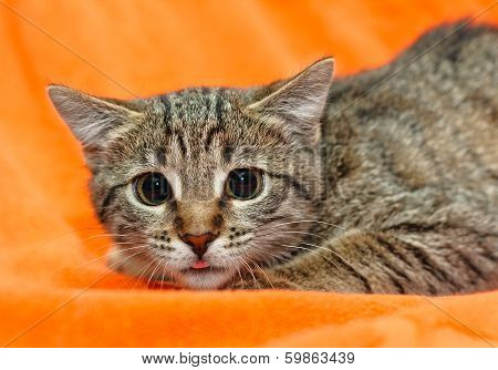 Cat With Big Eyes On Orange