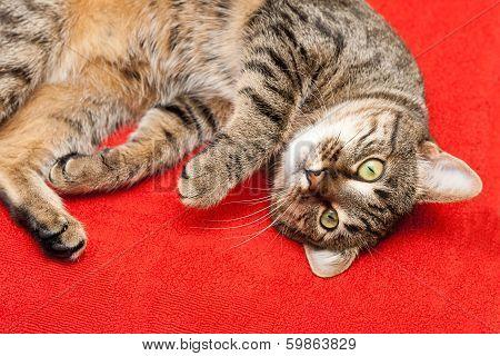 Nice Cat Has A Rest