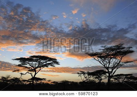 Sunset on savanna