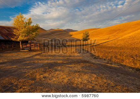 Golden grass fields farm