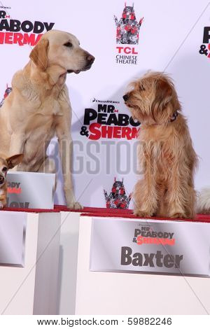 LOS ANGELES - FEB 14:  Marley, Baxter at the Mr. Peabody honored with Pawprints in Cement at TCL Chinese Theater on February 14, 2014 in Los Angeles, CA
