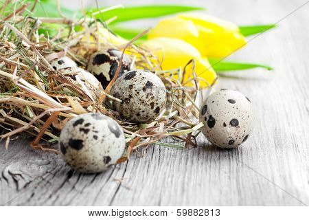 quail eggs with tulips on wooden background poster