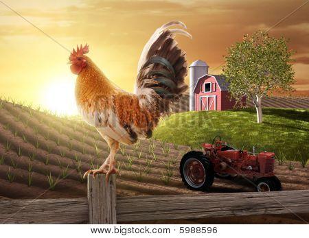Land boerderij ochtend