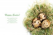 quail egg in nest isolated on white background poster
