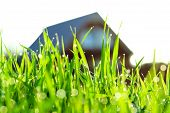 the concept a green grass on a lawn about the house poster