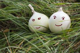 Happy Onions
