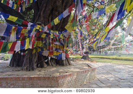 Colorful Buddhist Prayer Flags On Tree In Lumbinis, Nepal