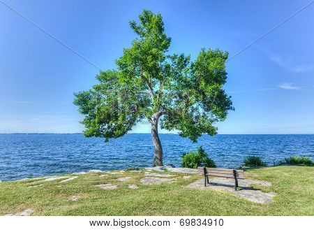 Tree And Bench In Macdonald Park, Kingston, Canada