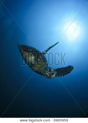 Turtle Descent