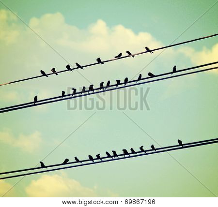birds on wires over blue sky with clouds background toned with a vintage retro instagram filter poster