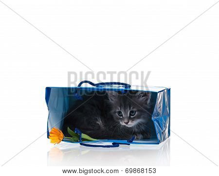 Scared cute kitten in a gift bag isolated on white background poster