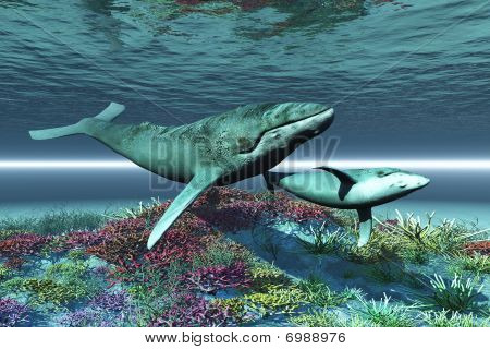 Humpback whale mother and calf swim over a colorful coral reef. poster