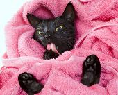 Cute black soggy cat licking after a bath drying off with a towel poster