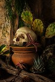 Still life with a human skull with desert plants cactus timber and chain. poster