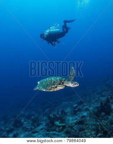 Turtle Cruising Past