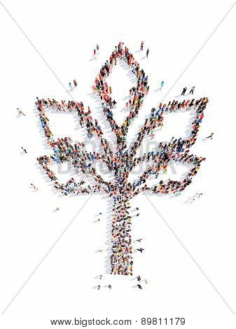 People in the shape of a tree.