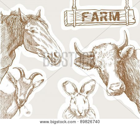rural animals