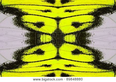 Beautiful multicolor pattern background texture made from Great Orange Tip Butterfly (Hebomoia glaucippe) poster