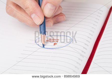 Female Hand With A Pencil