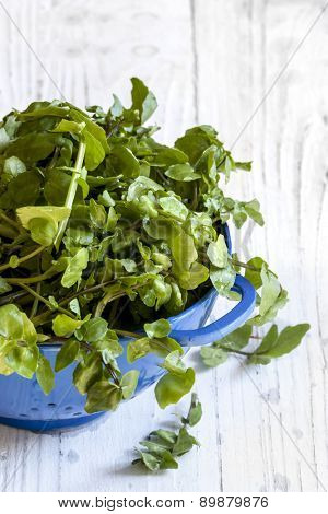 Watercress in blue colander over white timber background.