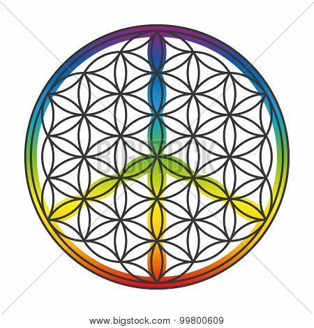 Flower Of Life Peace Symbol Superimposed
