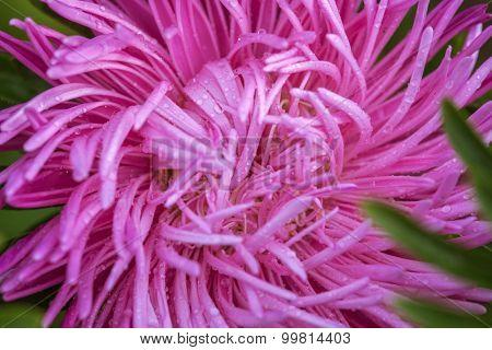Flower close up, macro shooting, soft lighting