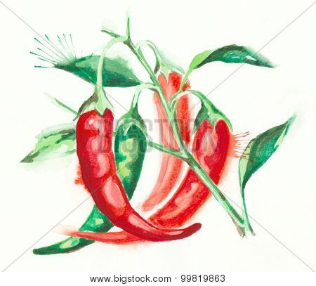 Red hot chili pepper water color painting