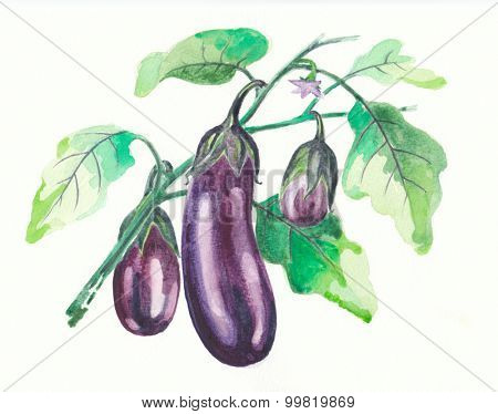 Eggplant water color painting