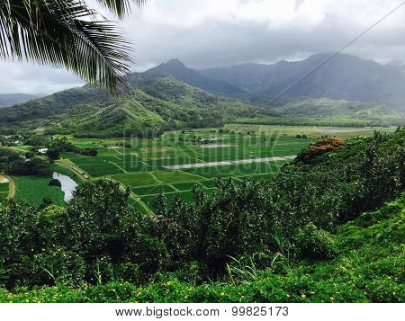The Lush Hanalei Valley