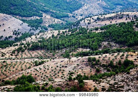 Landscape with olive trees in Thassos hills, Greece