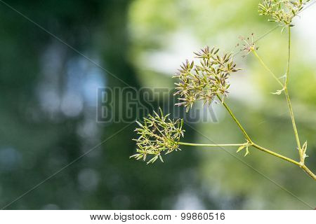 The Wild Abstract Blossoming Plant Closeup